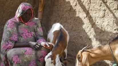 باب الجنان مع معزتيها ( تصوير أحمد أمين أحمد، هيئة الأمم المتحدة للمرأة)