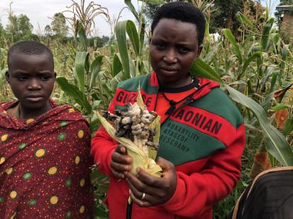 Conséquences du déficit hydrique sur le maïs - Photo © OCHA Burundi/Julie Languille