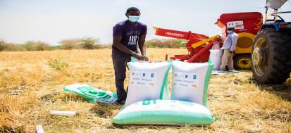 UNDP wheat