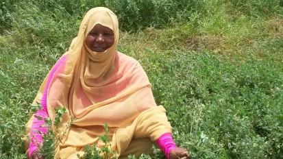 Aisha, a Food Hero in Sudan - FAO