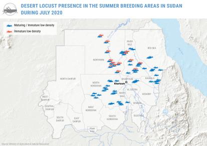 Desert locust presence in summer breeding areas in Sudan