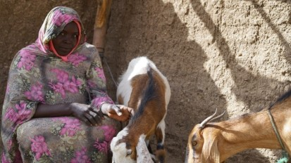 Bab Al-Ginan with her two goats (Ahmed Amin Ahmed, UN Women)