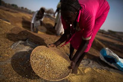 08 IDP-woman-collecting-millet SDarfur UNAMID 2014-x400
