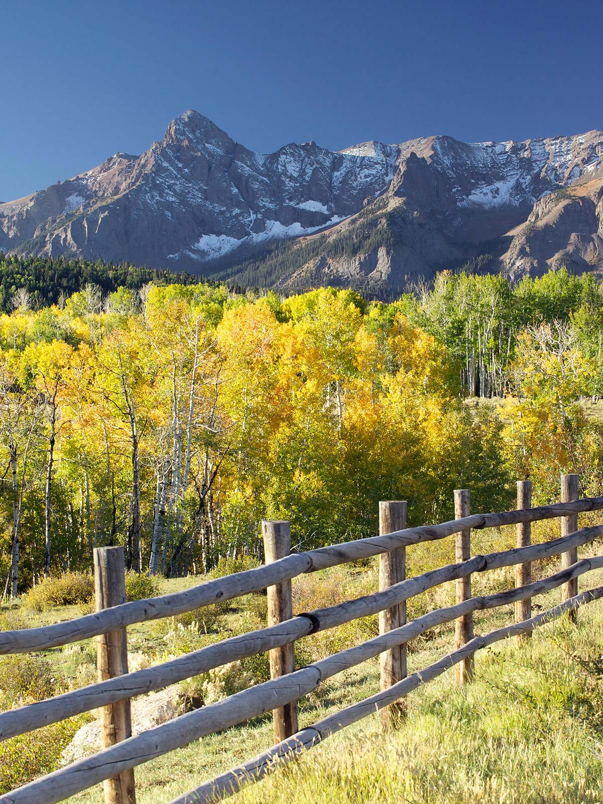 Fall colors and a fence in front of Colorado Rocky mountain range