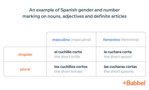learn spanish number and gender