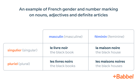 french gender and number table