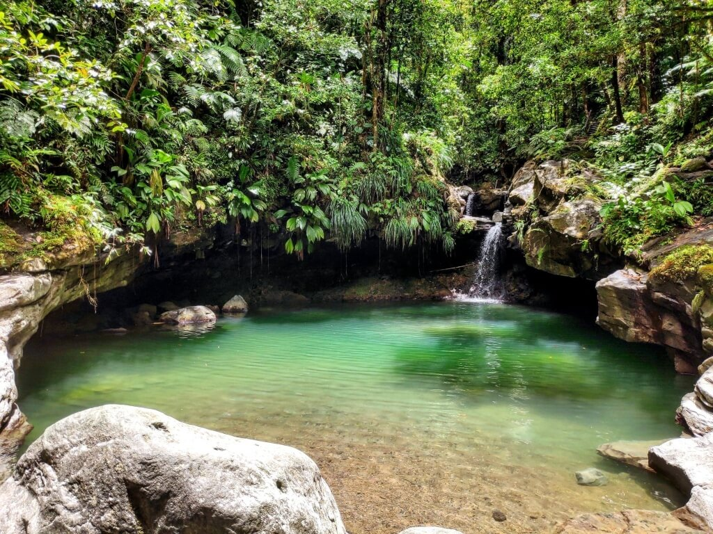 Bassin Paradise Cascade Guadeloupe