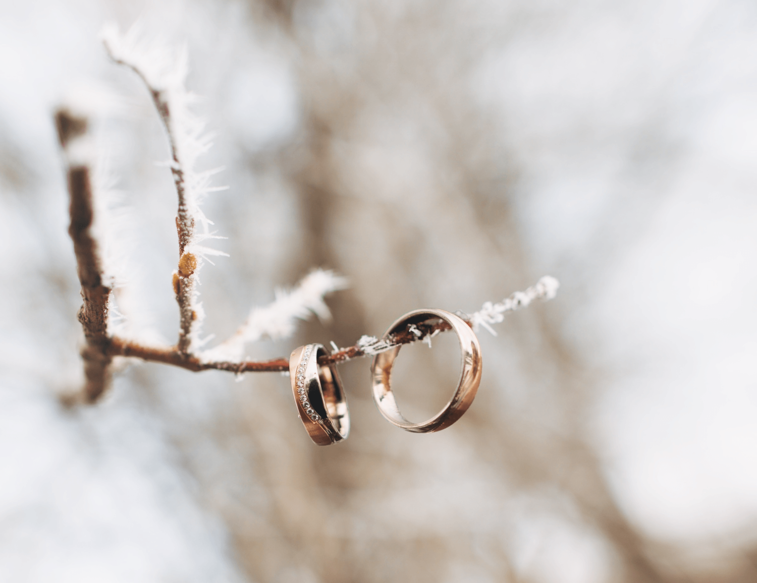 A couple's wedding rings on a branch with frost.