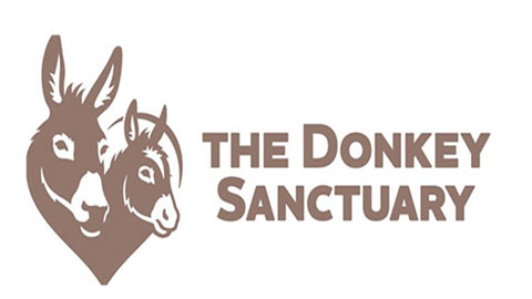 Veterinary Internship at The Donkey Sanctuary