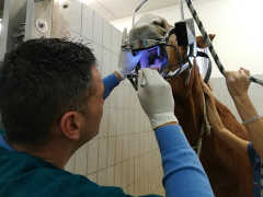 Equine Dentistry Course