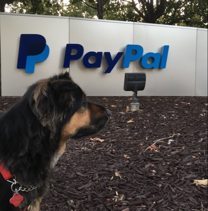 My dog sitting in front of the PayPal Headerquarters Sign