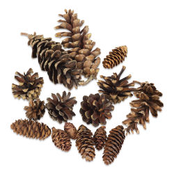 Winter Woods Pine Cones - Mixed Pine Cones, 16 Pieces