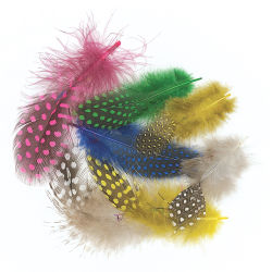 Spotted Guinea Feathers, Bag of Approximatley 640