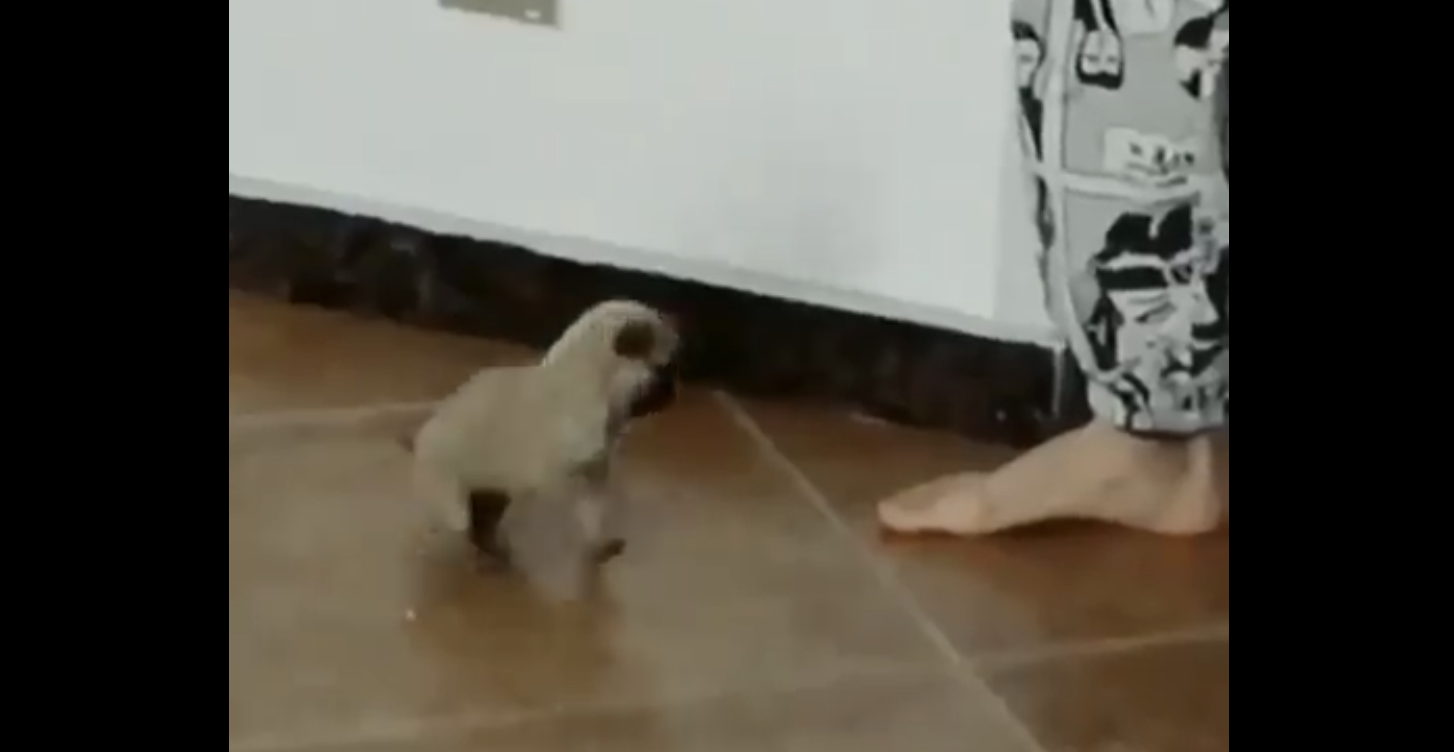 A small puppie ready to jump around