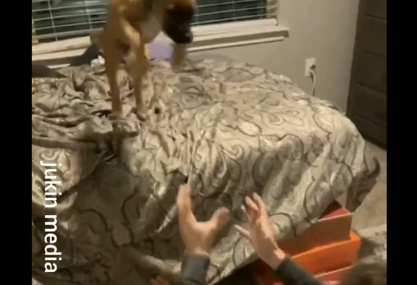 A dog jumping off a bed