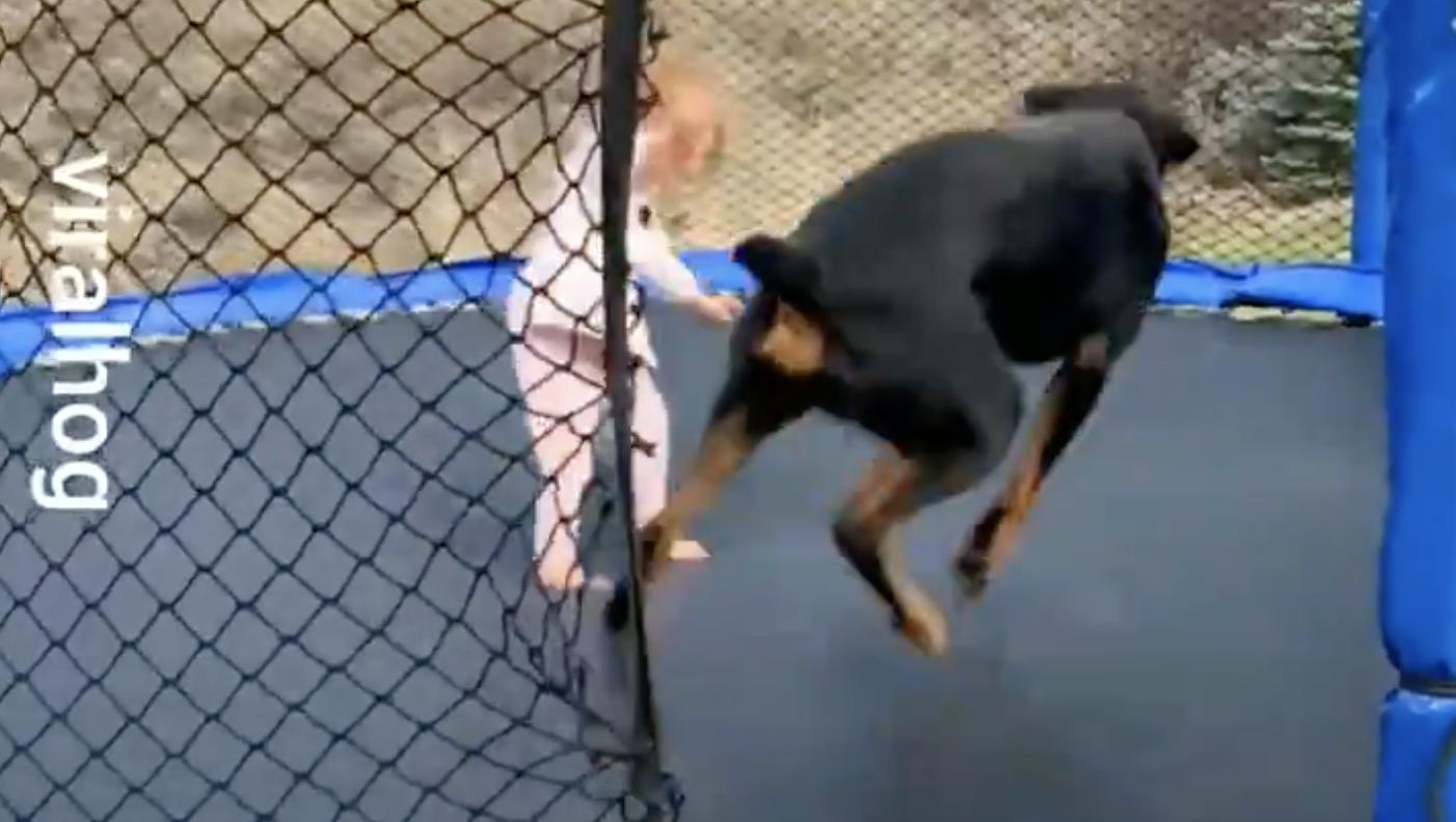 A dog on a trampolin