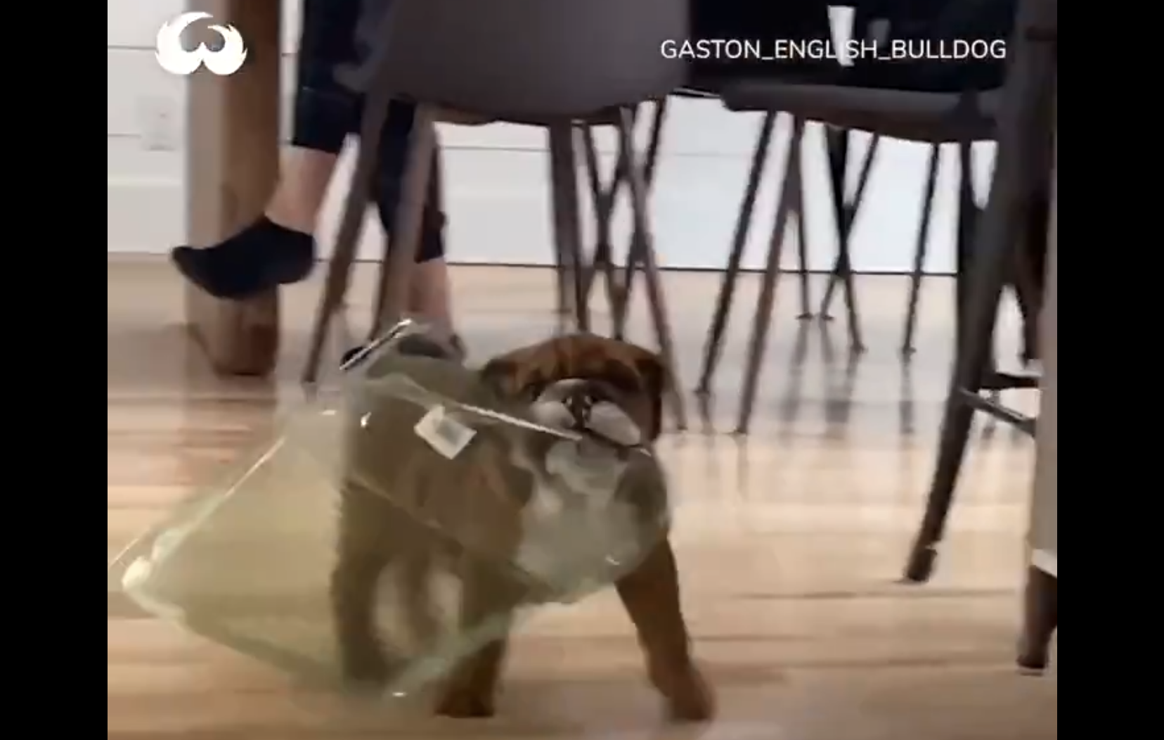 Dog with a plastic thing in his mouth