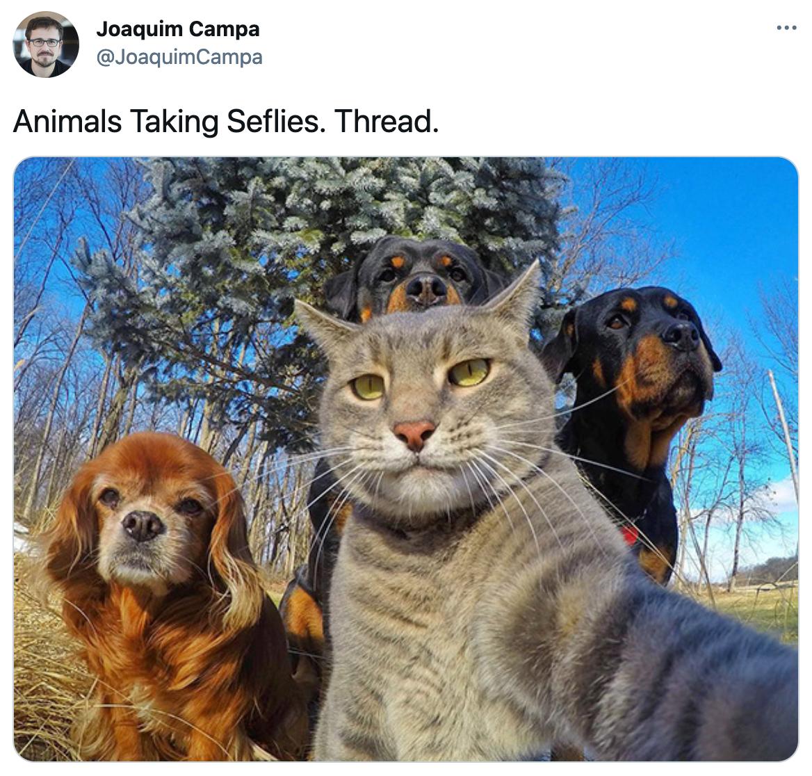 Badass animal selfie on Twitter
