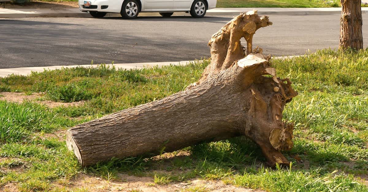 He Was Going To Haul Off This Old Stump Until He Decided To Make This Now Beautiful Littlethings Com