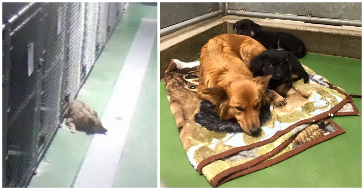 Pet Motel Camera Captures Dog Sneaking Out Of Kennel To Comfort 2 Crying Foster Puppies