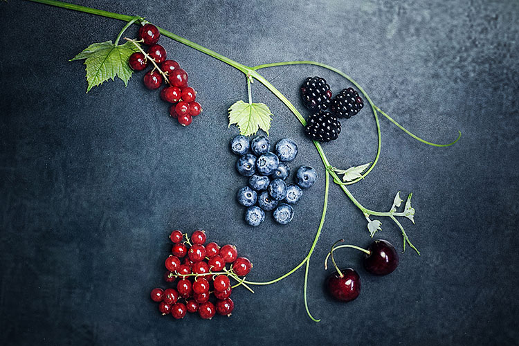 images of berries on a vine with a grey background