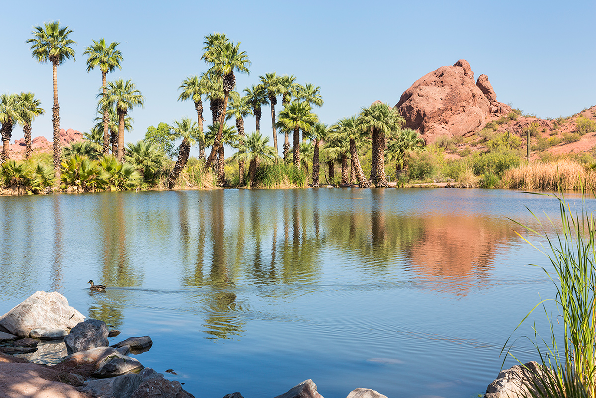 image of a body of water with palm trees in the background