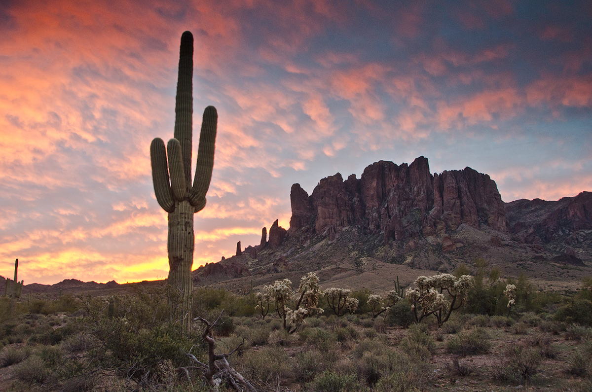 image of a cactus against the sunset in Arizona