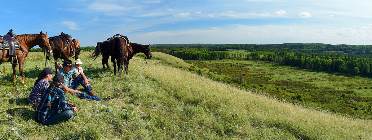 horses and people overlooking a green hill.