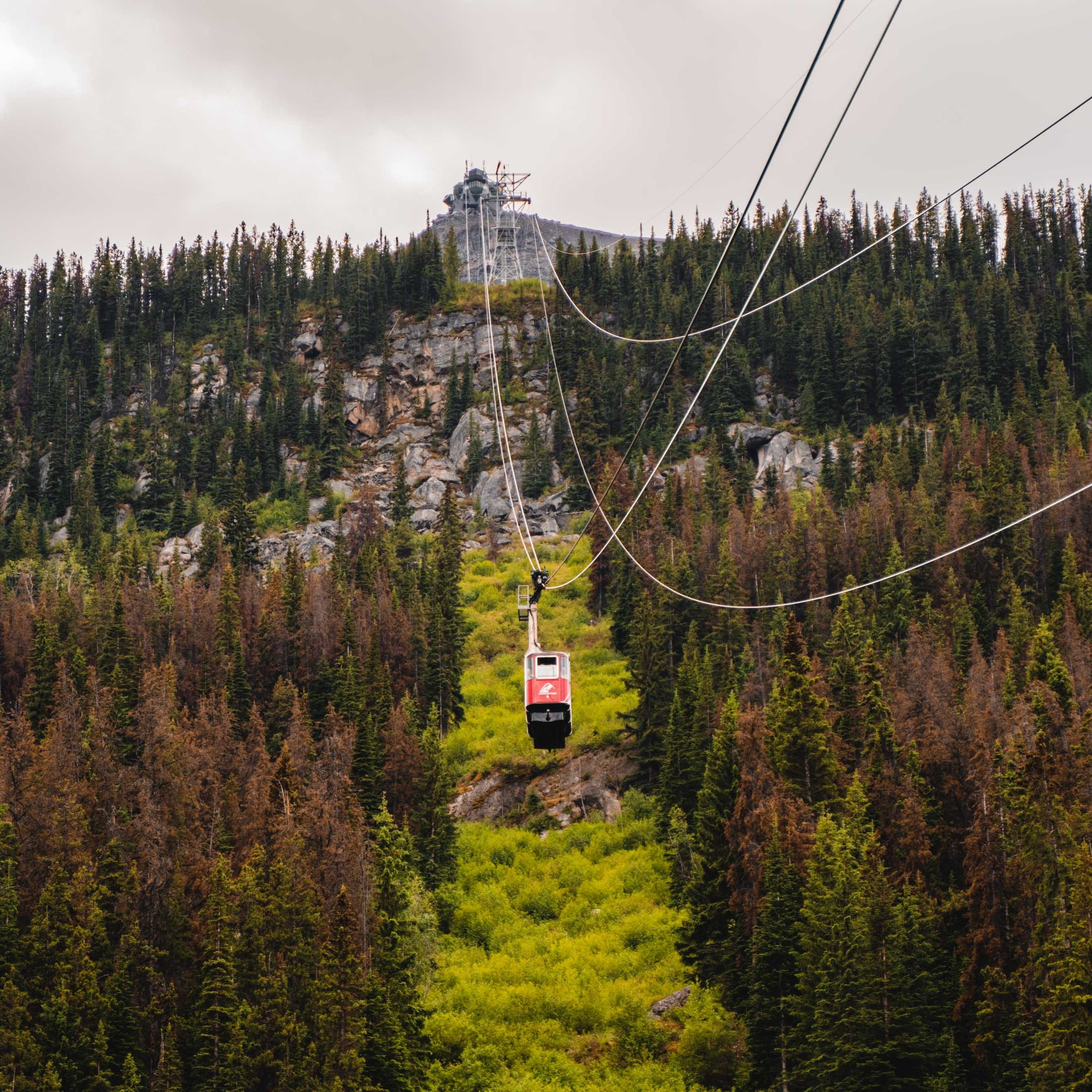 Swoop | picture of the Jasper SkyTram, get the best views of the Canadian Rockies up high at 2,263 metres off the ground