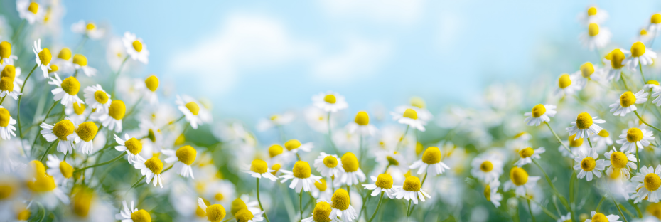What are the benefits of chamomile