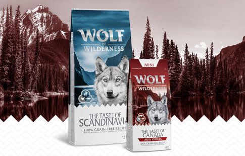 Wolf of Wilderness The Taste of