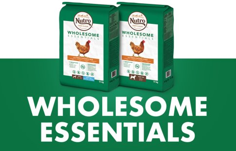 Nutro Wholesome Essentials para perros