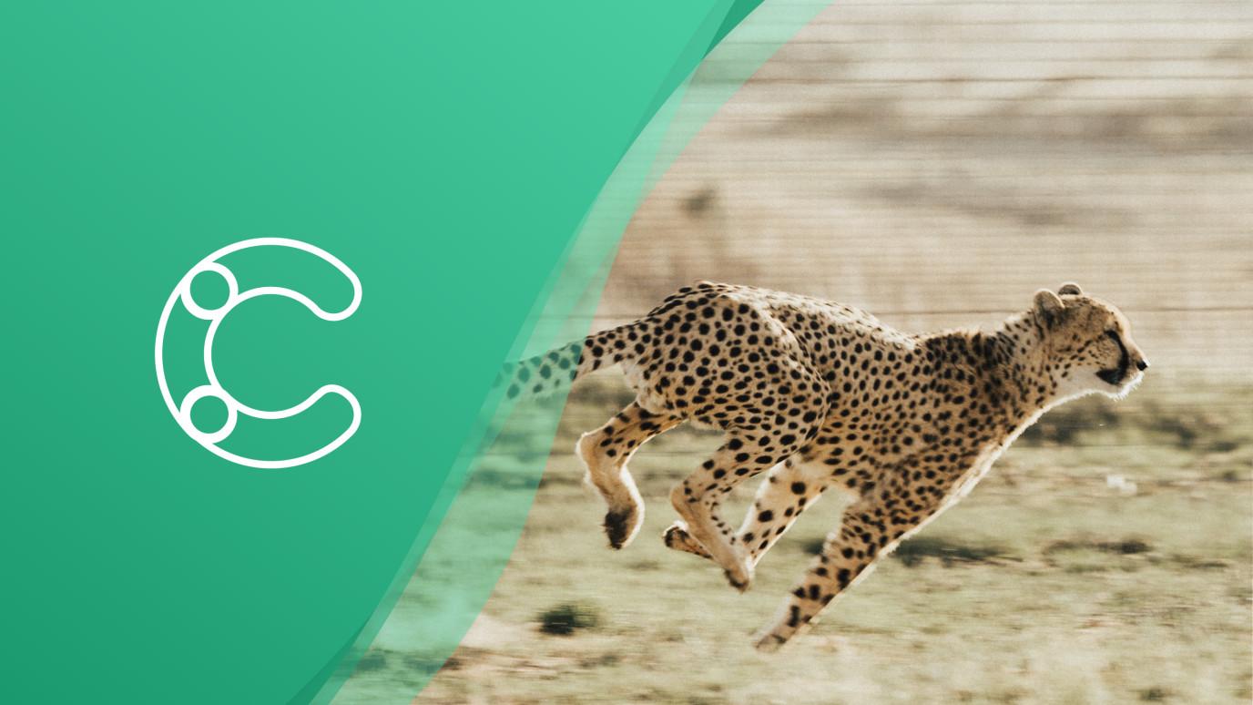 Cheetah blog header