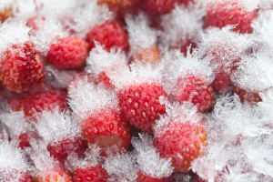 How to prevent freezer burn.