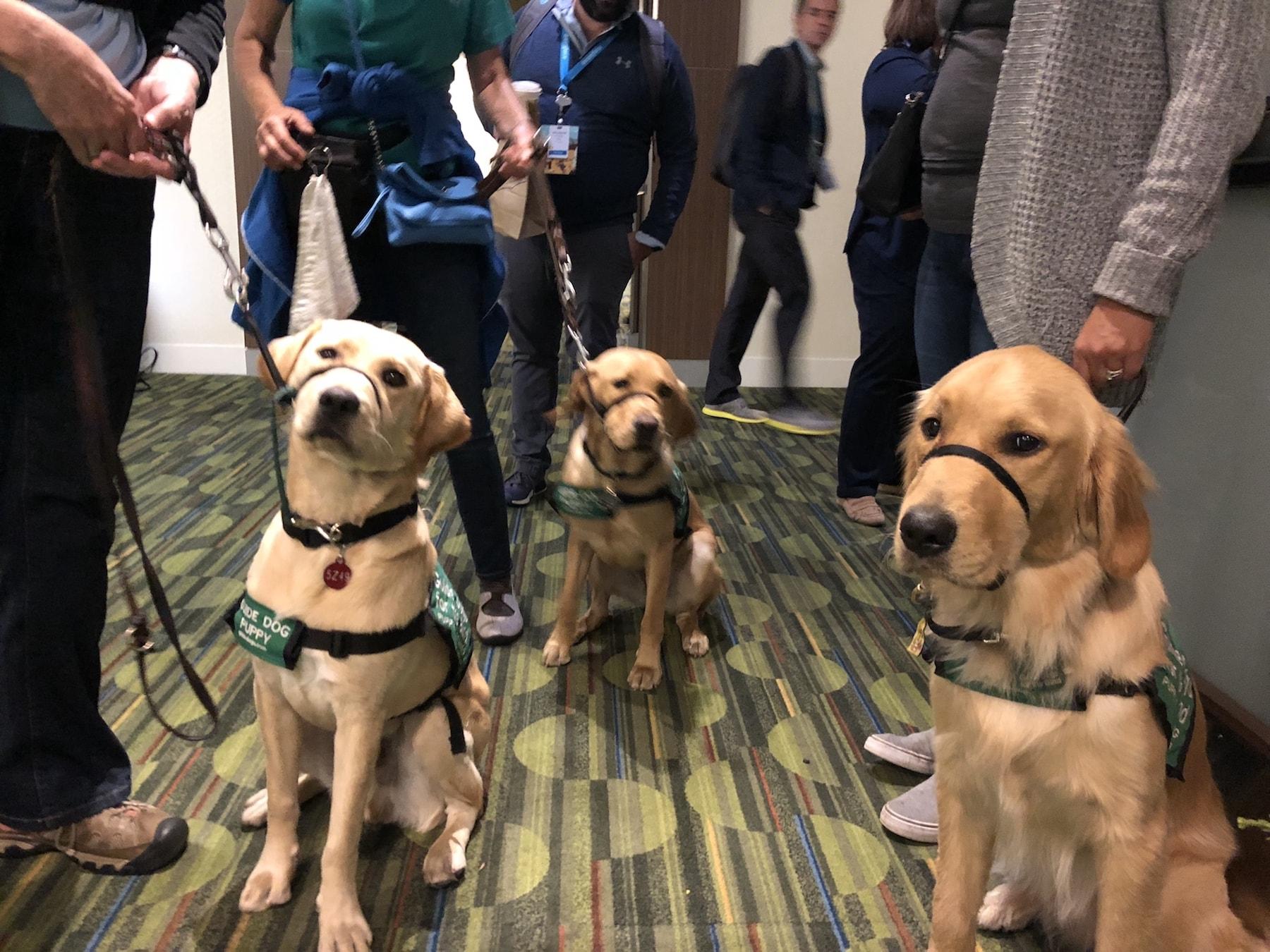 Dreamforce 2018 - dogs