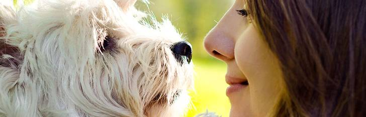 Hundägare? Grattis – då är du i bättre form