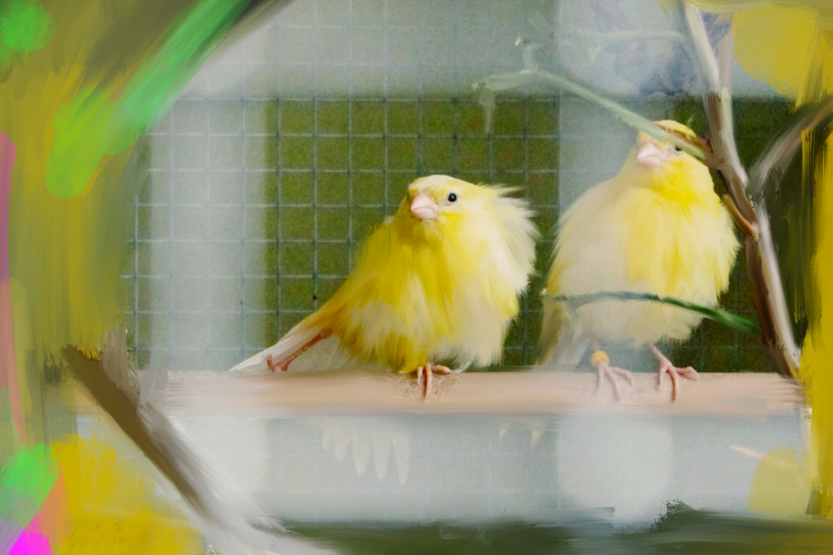 This pandemic isn't a swan—it's a canary