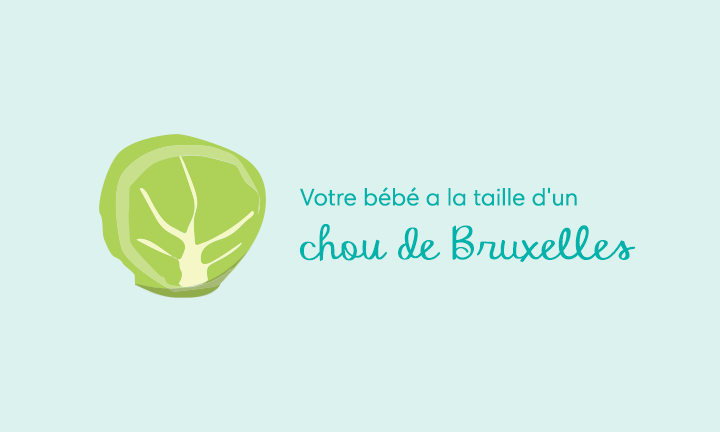 Your baby is the size of a Brussels sprout