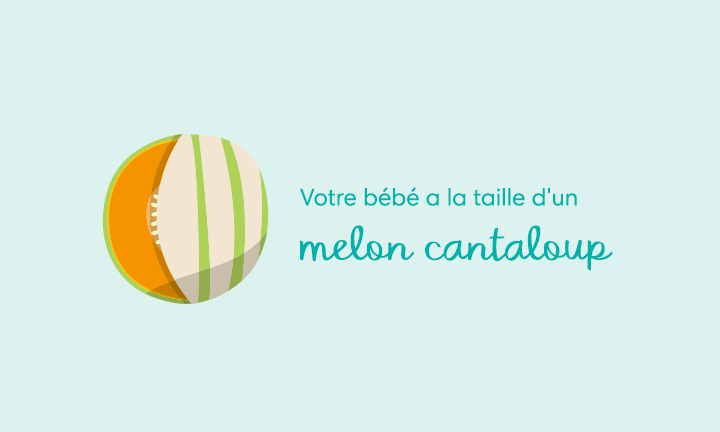 Your baby is the size of a cantaloupe