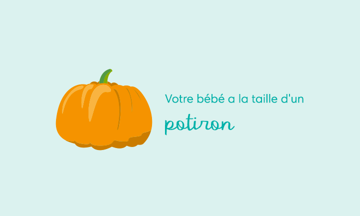 Your baby is the size of a pumpkin