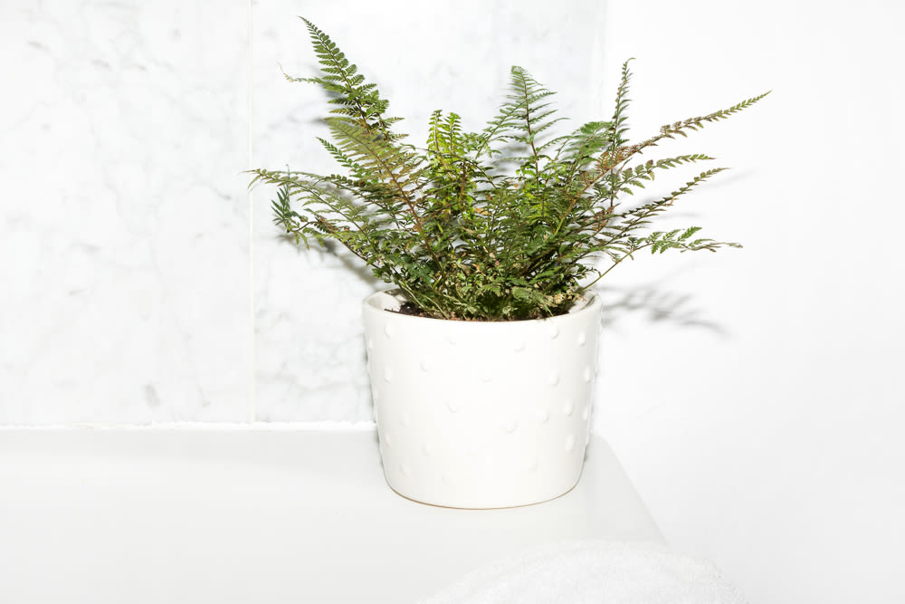 Plants For Bathrooms That Feel Spa Worthy Into The Gloss