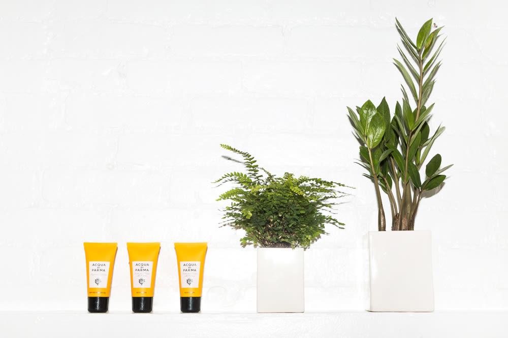 11 Plants For Bathrooms That Feel Spa Worthy