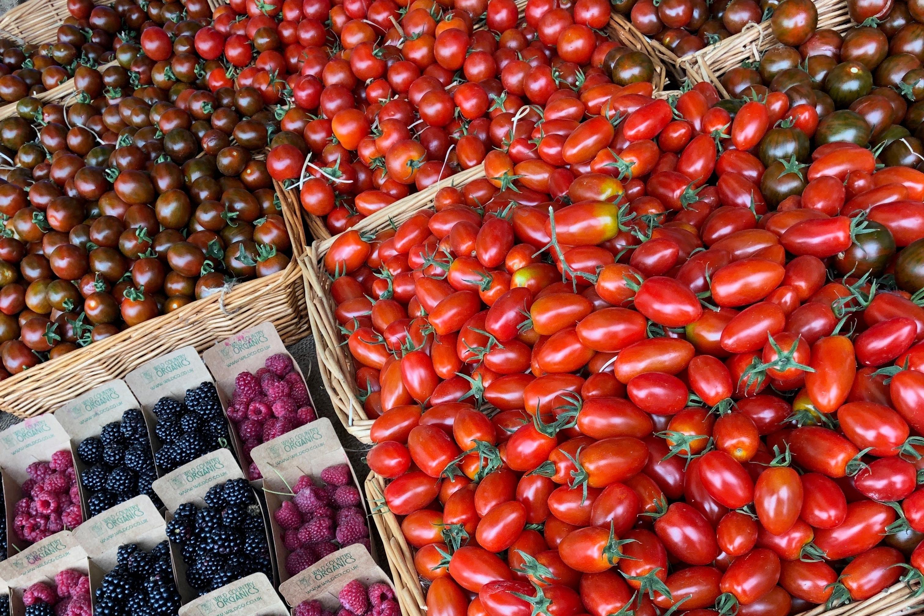 É hora de dar um tiro de velas de tomate 1