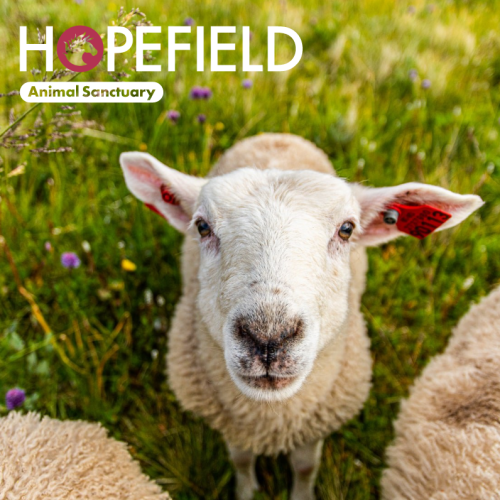 Hopefield Sanctuary