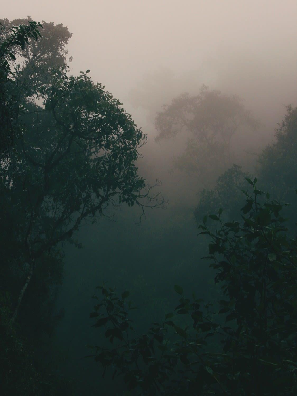 chorotrek (Photo 0)