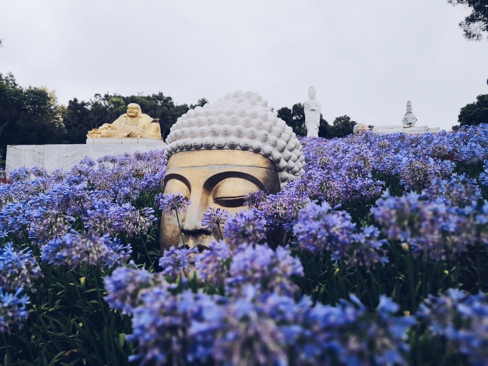 Buddha Eden Quinta dos Loridos 1