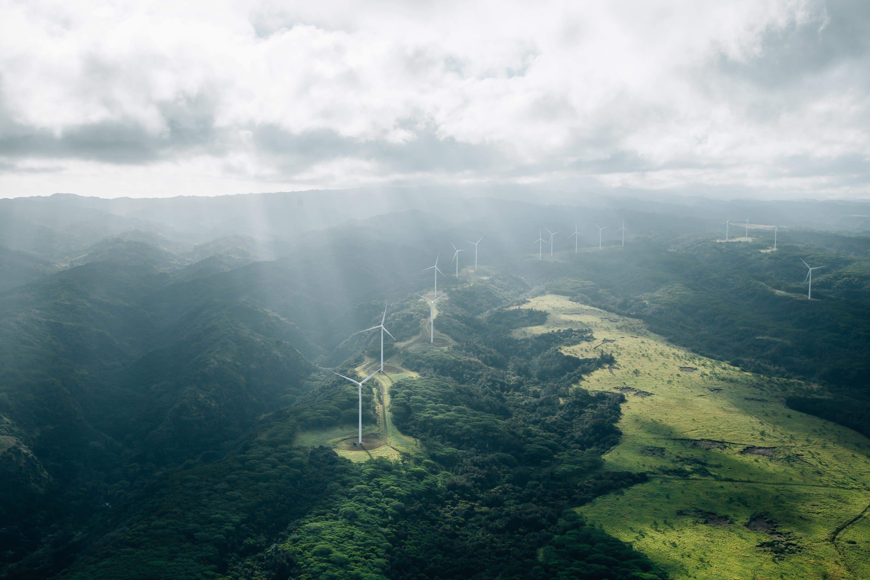 Aloha (Photo 2)