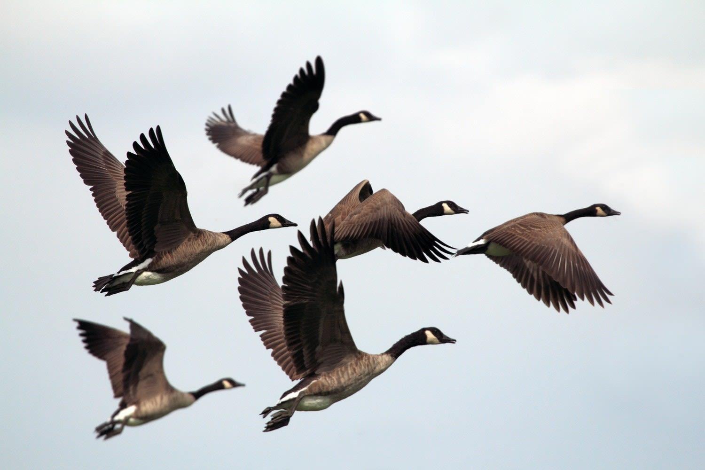 Birds (Photo 1)