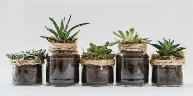 Preventing Pests in Your Houseplants