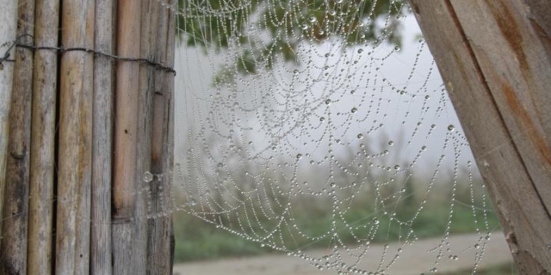 Are All Spiders Venomous